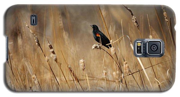 Red Winged Blackbird Galaxy S5 Case by Ernie Echols