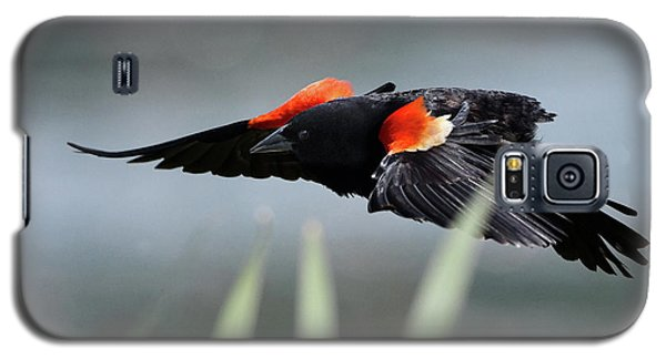 Red-winged Blackbird Galaxy S5 Case