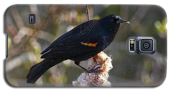 Galaxy S5 Case featuring the photograph Red-winged Blackbird On Cattail Reed by Sharon Talson