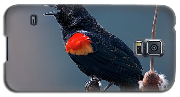 Red-winged Blackbird Singing Galaxy S5 Case