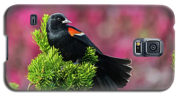Red Winged Blackbird With Crabapple Blossoms Galaxy S5 Case