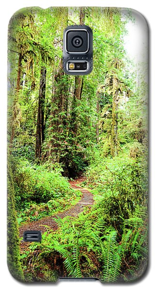Red Woods Trail Galaxy S5 Case