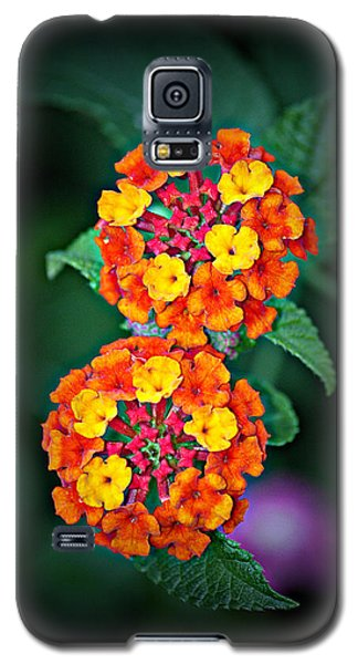 Galaxy S5 Case featuring the photograph Red Yellow And Orange Lantana by KayeCee Spain