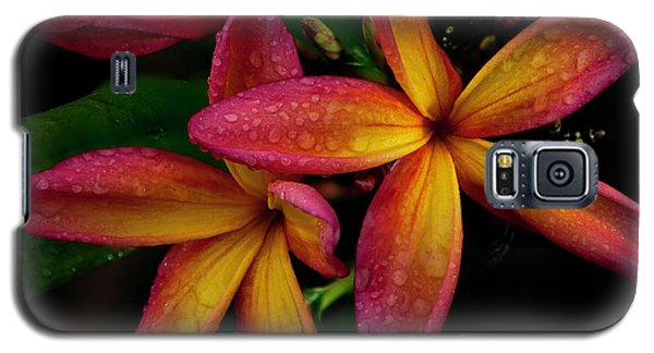 Red/yellow Plumeria In Bloom Galaxy S5 Case