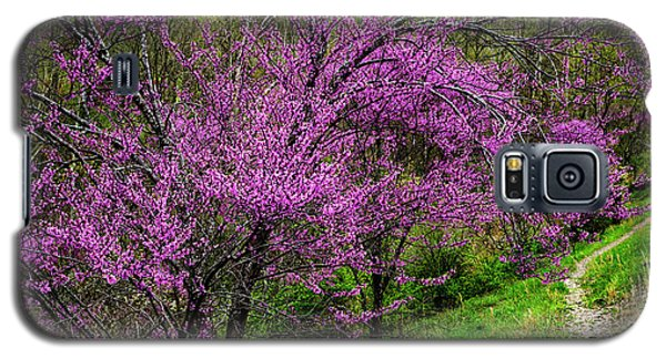 Galaxy S5 Case featuring the photograph Redbud And Path by Thomas R Fletcher