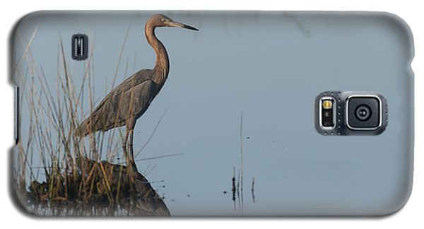 Reddish Egret And Reflection In The Morning Light Galaxy S5 Case