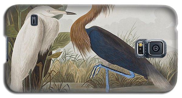 Reddish Egret Galaxy S5 Case by John James Audubon