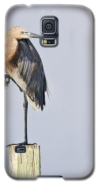 Galaxy S5 Case featuring the photograph Reddish Egret On Piling by Bob Decker