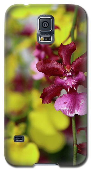 Maroon And Yellow Orchid Galaxy S5 Case