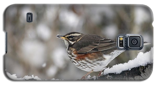 Redwing Perched On A Snowy Branch Galaxy S5 Case