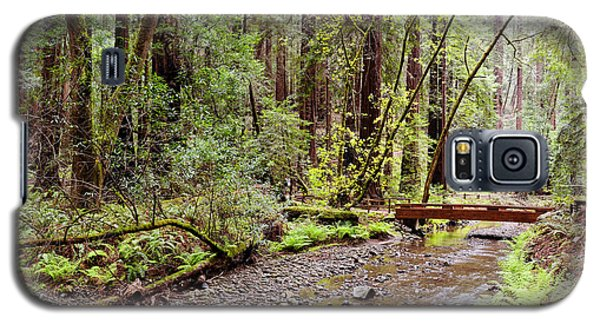 Redwood Creek Flowing Through Muir Woods National Monument - Mill Valley Marin County California Galaxy S5 Case