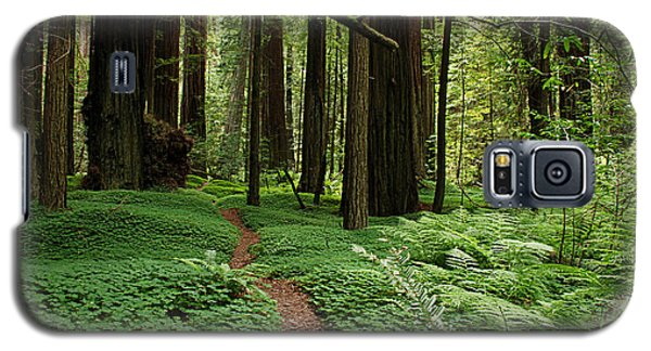 Redwood Forest Path Galaxy S5 Case by Melany Sarafis