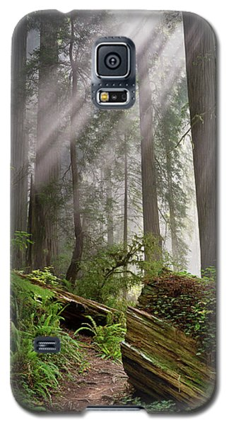 Redwood Light Galaxy S5 Case by Greg Nyquist