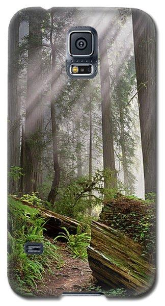 Redwood Light Galaxy S5 Case