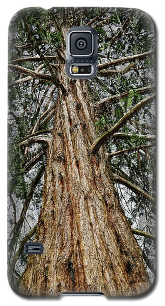 Redwood Reaches For The Sky Galaxy S5 Case