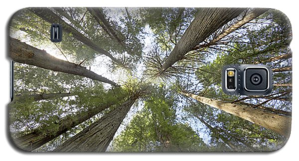 Redwood Towering Giants Galaxy S5 Case