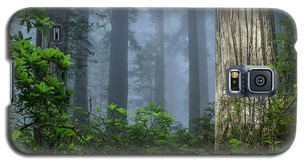 Redwoods In Blue Fog Galaxy S5 Case by Greg Nyquist