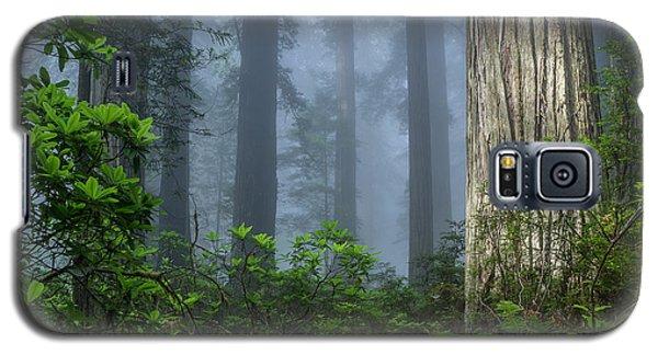 Redwoods In Blue Fog Galaxy S5 Case