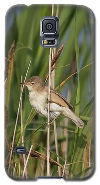 Reed Warbler Galaxy S5 Case