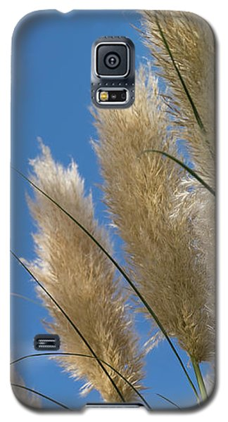 Reeds Against Sky Galaxy S5 Case