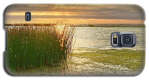 Reeds In The Sunset Galaxy S5 Case