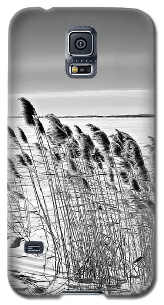 Reeds On A Frozen Lake Galaxy S5 Case