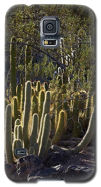 Galaxy S5 Case featuring the photograph Reflecting The Sunshine by Phyllis Denton