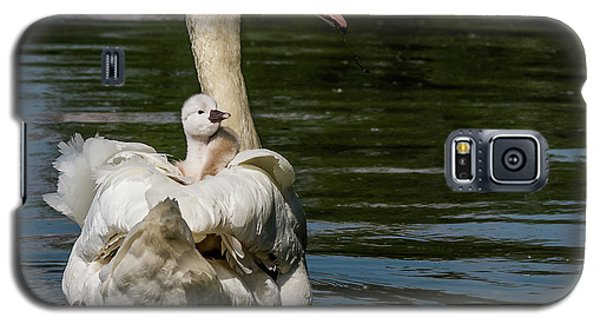 Regal Cygnet Galaxy S5 Case