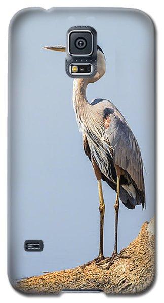 Regal Great Blue Heron Galaxy S5 Case