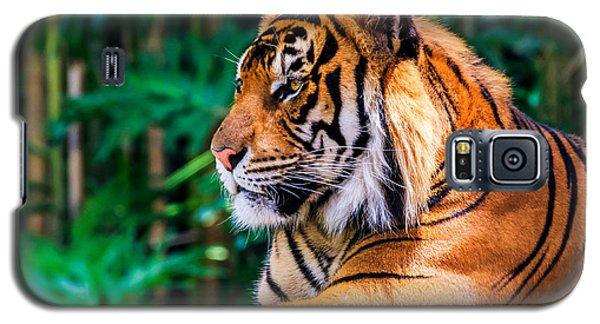 Regal Tiger Galaxy S5 Case