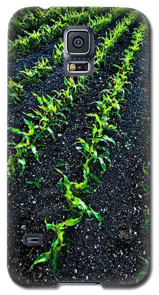 Regimented Corn Galaxy S5 Case