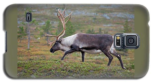 Reindeer Galaxy S5 Case