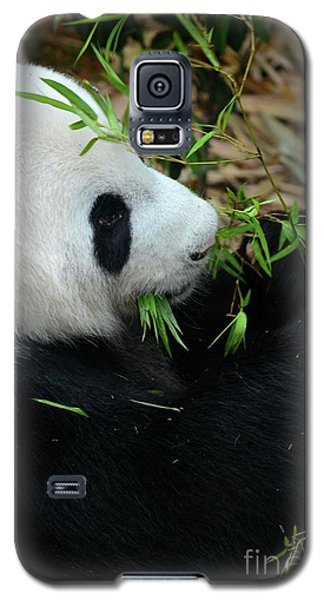 Relaxed Panda Bear Eats With Green Leaves In Mouth Galaxy S5 Case