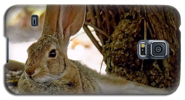 Relaxing Cottontail Galaxy S5 Case