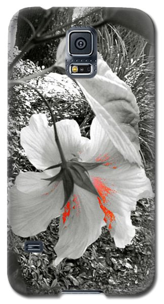 Remembrance Galaxy S5 Case by Cathy Dee Janes