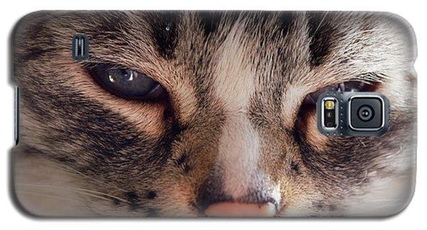 Remi Cat Galaxy S5 Case