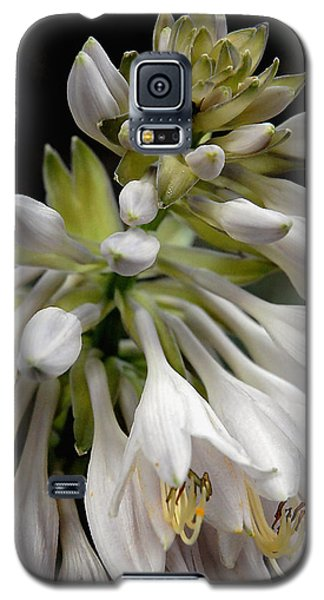 Galaxy S5 Case featuring the photograph Renaissance Lily by Marie Hicks