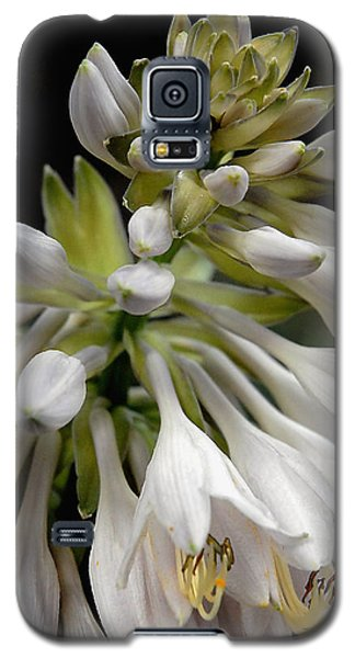 Renaissance Lily Galaxy S5 Case by Marie Hicks