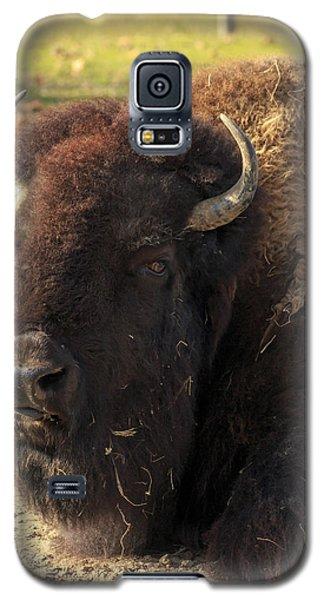 Resting Buffalo Galaxy S5 Case