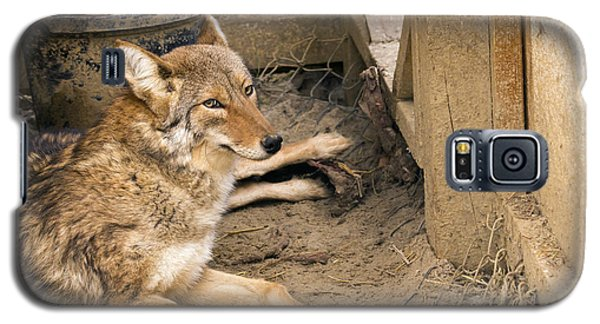 Resting Coyote Galaxy S5 Case
