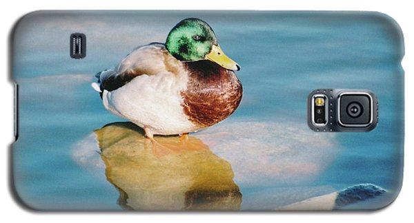 Resting Mallard Galaxy S5 Case