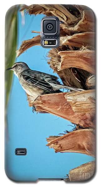 Galaxy S5 Case featuring the photograph Resting Mockingbird by Robert Bales