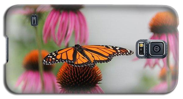 Resting Monarch Galaxy S5 Case by Yumi Johnson