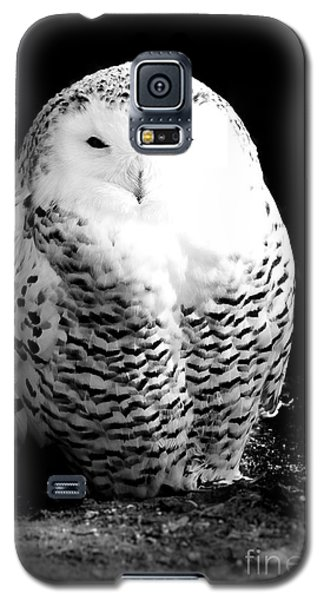 Resting Snowy Owl Galaxy S5 Case by Darcy Michaelchuk