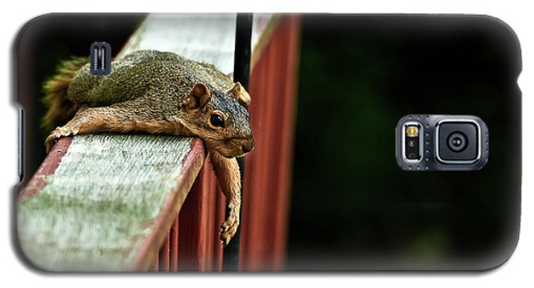 Resting Squirrel Galaxy S5 Case by  Onyonet  Photo Studios