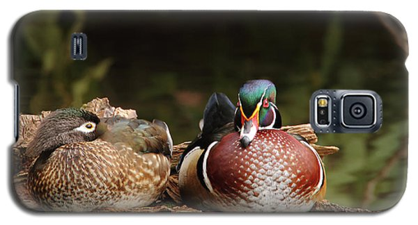 Resting Wood Ducks Galaxy S5 Case