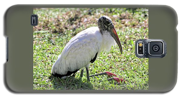 Resting Wood Stork Galaxy S5 Case