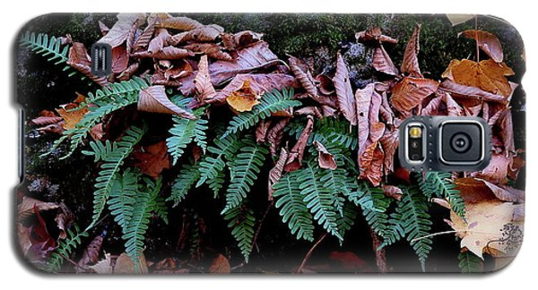 Resurrection Fern Along The Appalachian Trail Galaxy S5 Case