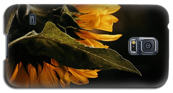 Galaxy S5 Case featuring the photograph Reticent Sunflower by Douglas MooreZart