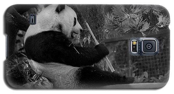 Revel In Bamboo Galaxy S5 Case